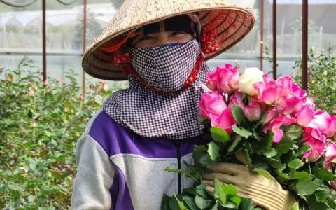 Dịch diễn biến phức tạp, 100 triệu cành hoa ở Lâm Đồng cần được hỗ trợ tiêu thụ