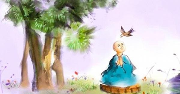 con-nguoi-chi-can-song-luong-thien-troi-xanh-at-co-su-an-bai-2
