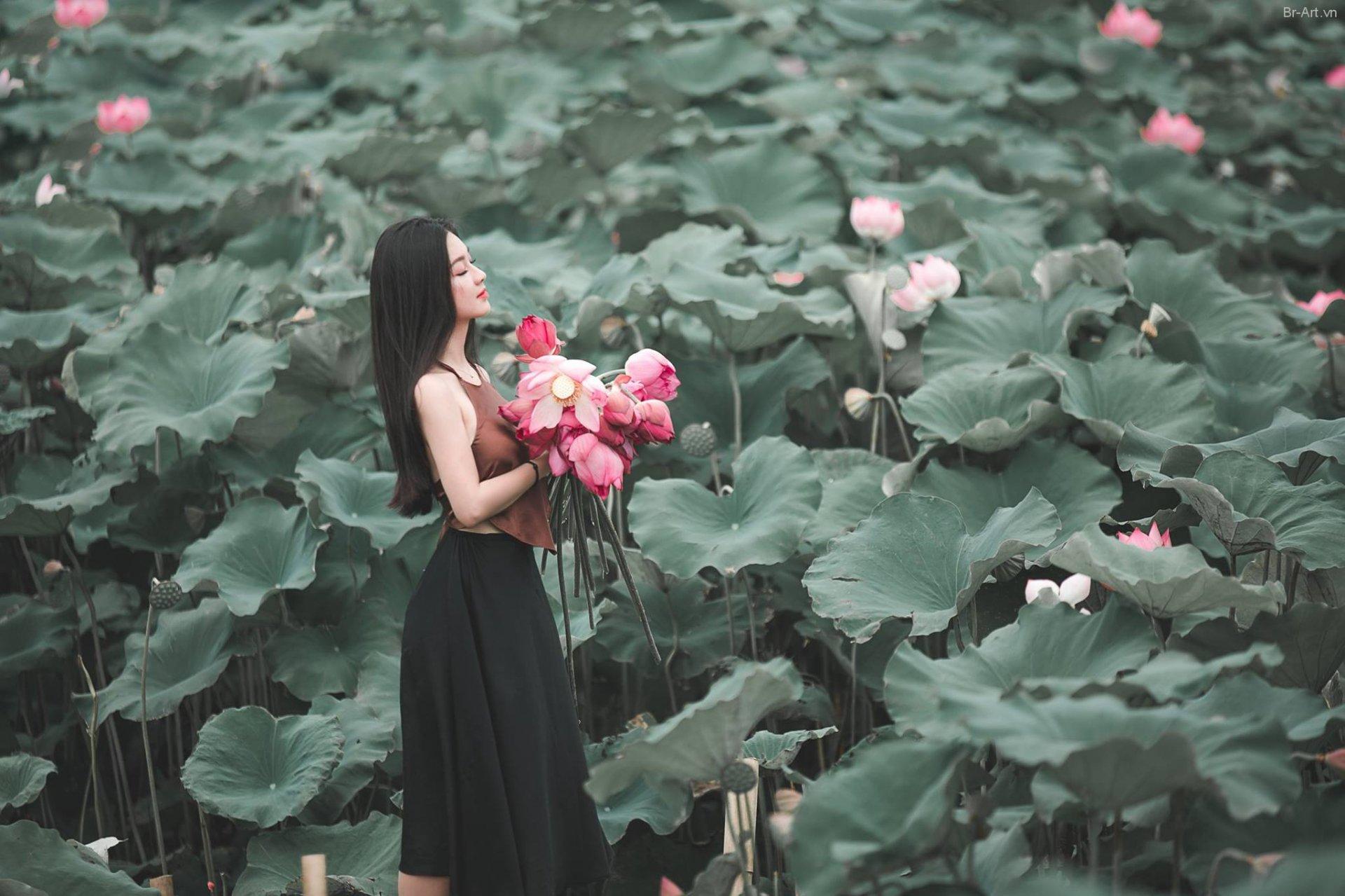 chup anh hoa sen 8