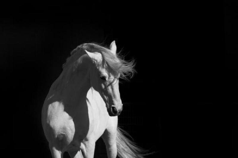 Truyền thuyết 'bạch mã hiện hình' và chuyện dân Tây Sơn không nuôi ngựa trắng
