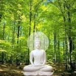 Phật dạy: Trồng cây xanh để có bóng mát, đem lại cuộc sống thanh bình, thịnh lạc cho muôn loài