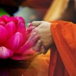 Phật dạy: Tâm làm chủ và dẫn đầu các Pháp