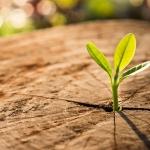 Bài học từ người Thầy: Biến khuyết điểm thành lợi thế là một điều kỳ diệu