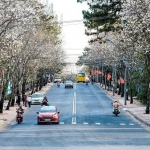 Thành phố duy nhất tại Việt Nam không dùng đèn giao thông nay đã muốn lắp thêm đèn xanh đèn đỏ?