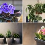 Ở nhà nghỉ dịch 12 cung hoàng đạo nên trồng loại cây nào để đem lại may mắn?