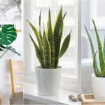 11 loại cây nên trồng trong nhà để nâng cấp không gian sống của bạn