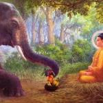 Sức mạnh của lòng từ bi theo giáo lý nhà Phật
