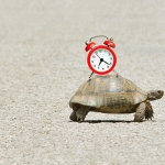 Thấm nhuần triết lý 'con rùa', đời này hiểm ác ta chẳng hề chi
