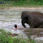 Con voi tốt bụng phi thẳng xuống sông cứu người đuối nước