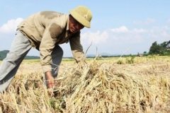 Tâm sự xúc động của con gái: 'Bố tôi là nông dân, tôi tự hào về điều đó'