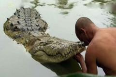 Kỳ lạ chú cá sấu sống ở ngôi đền thiêng: Hơn 70 năm chỉ ăn chay