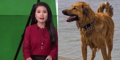 Chú chó trung thành vượt 100km về 'hôn' người chủ đã bỏ rơi mình vì quá nhớ